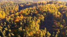 Złota polska jesień w Trójmiejskim Parku Krajobrazowym