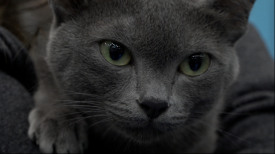 Międzynarodowa Wystawa Kotów Rasowych Gdańsk 2019
