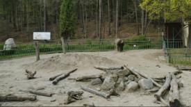 Gdańskie zoo w czasie pandemii - film z drona