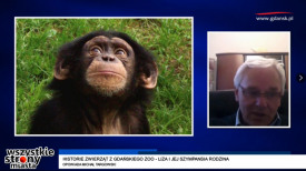 Historie zwierząt z gdańskiego zoo - Liza i jej szympansia rodzina