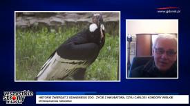 Historie zwierząt z gdańskiego zoo - życie z inkubatora, czyli Carlos i kondory wielkie